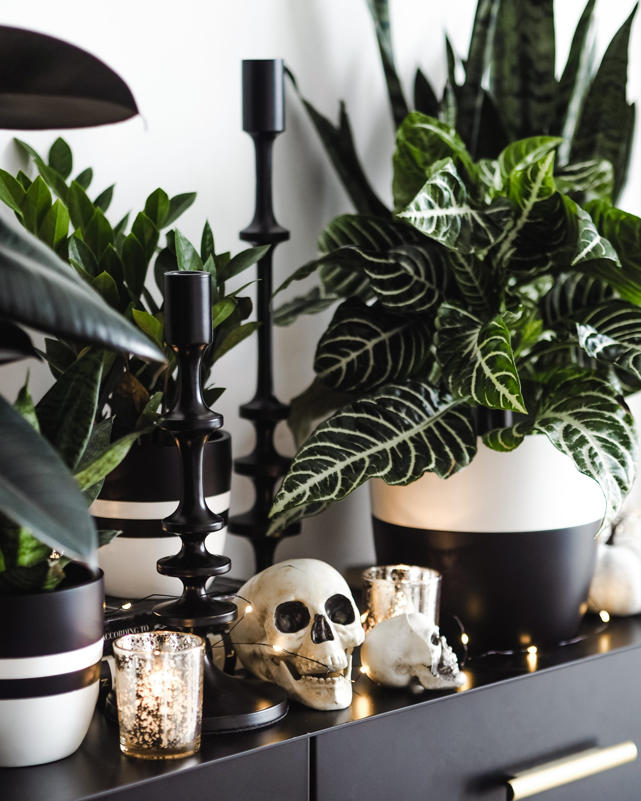 Dark green potted plants alongside halloween decorations like skulls and dark candle holders.